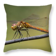 Dragonfly On A Wire Throw Pillow