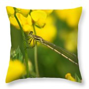 Dragonfly On Birds-foot Trefoil Throw Pillow