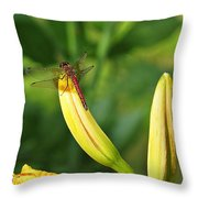 Dragonfly On Bud Throw Pillow