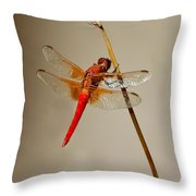 Dragonfly On Dead Reed Throw Pillow