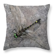Dragonfly On Rock Throw Pillow