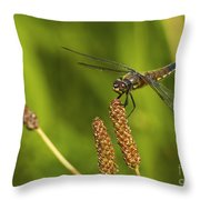 Dragonfly On Seed Pod 2 Throw Pillow