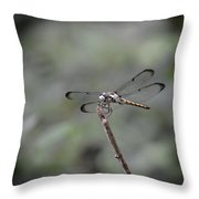 Dragonfly Perched Throw Pillow