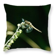 Dragonfly Resting In The Wind  Throw Pillow