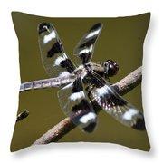 Dragonfly Twelve Spot Skimmer Throw Pillow