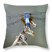 Dragonfly Wing Details II Throw Pillow