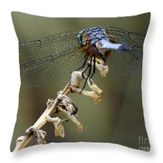 Dragonfly Wing Details Throw Pillow