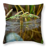 Dragonfly X-ray Throw Pillow