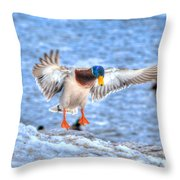 Drake Alighting Throw Pillow