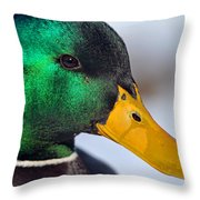Drake Up Close Throw Pillow