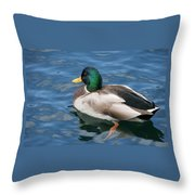 Green Headed Mallard Duck Throw Pillow