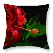 Dramatic Red Hibiscus Throw Pillow