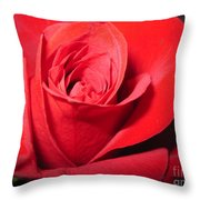 Dramatic Red Rose  Throw Pillow