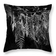 Draping Cedar Throw Pillow by Charmian Vistaunet