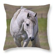 Lipizzane Dreaming Throw Pillow
