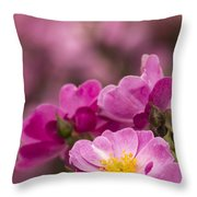 Pink Old Fashioned Rose Throw Pillow
