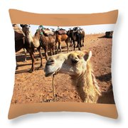 Dreaming Of Hump Day Throw Pillow