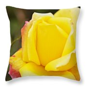 Dream's Come True Rose By Walter Herrit  Throw Pillow