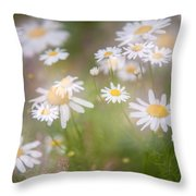 Dreamy Daisies On Summer Meadow Throw Pillow