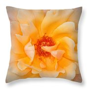 Dreamy Orange Rose Throw Pillow