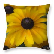Dreamy Rudbeckia Squared Throw Pillow