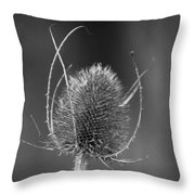 Dried Common Teasel Throw Pillow