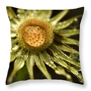 Dried Dandelion After Rain Throw Pillow by Iris Richardson