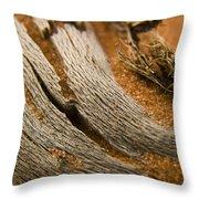 Driftwood 2 Throw Pillow by Adam Romanowicz