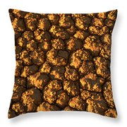 Dry Lakebed, Nevada Throw Pillow