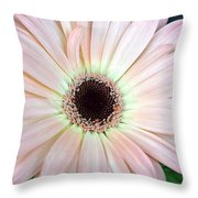 Dsc0001d Throw Pillow