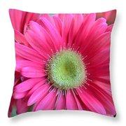 Dsc0020d Throw Pillow
