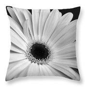 Dsc0056d1-001 Throw Pillow