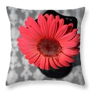Dsc0064d Throw Pillow