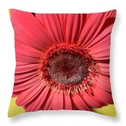 Dsc0073d Throw Pillow