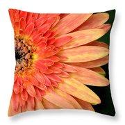 Dsc1484z-001 Throw Pillow