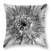 Dsc1484z2-002 Throw Pillow