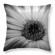 Dsc202d3 Throw Pillow