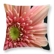 Dsc250d-003 Throw Pillow
