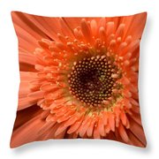 Dsc259d1 Throw Pillow