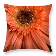 Dsc261d2-004 Throw Pillow