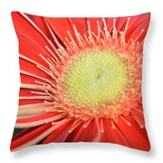 Dsc275-004 Throw Pillow
