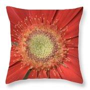 Dsc286-003 Throw Pillow