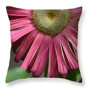 Dsc303-002 Throw Pillow