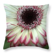 Dsc339-001 Throw Pillow