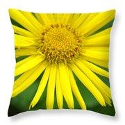 Dsc343d-002 Throw Pillow