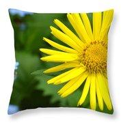 Dsc344d-001 Throw Pillow