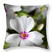 Dsc377d-001 Throw Pillow