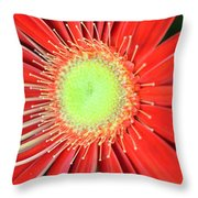 Dsc437d Throw Pillow