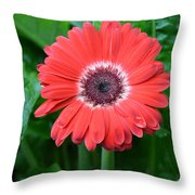 Dsc457-001 Throw Pillow