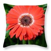 Dsc484d Throw Pillow
